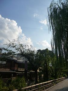 枝垂れ柳と夕方の空