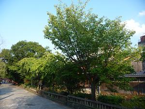 静かな祇園白川