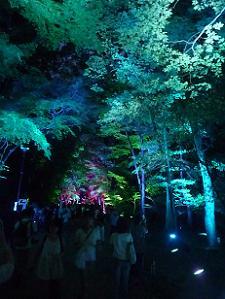 糺の森の入り口付近