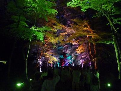 様々な光に照らされた糺の森