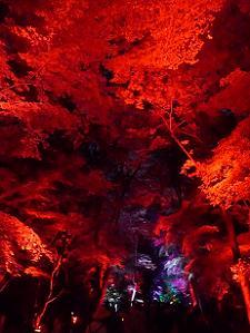 真っ赤な糺の森