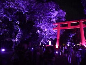 紫色の光と鳥居