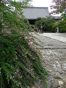 参道脇の萩