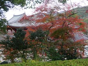 鳳凰堂裏の紅葉