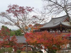 鳳凰堂と紅葉