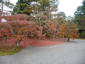 建春門付近の紅葉