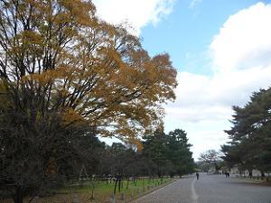 黄葉した背の高い木