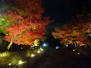 参道のライトアップされた紅葉