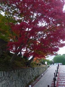 夕方に見た参道の紅葉