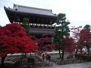 夕方に見た山門と紅葉