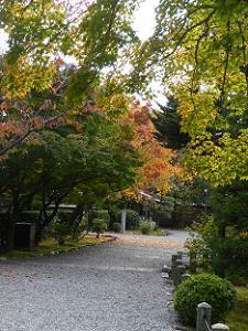 色付くカエデの葉