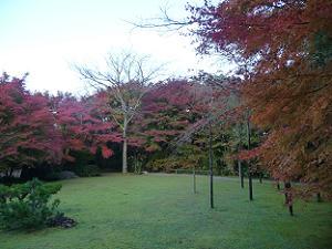 芝生と紅葉