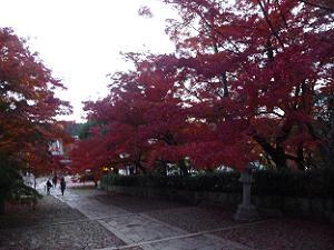 参道から見る紅葉