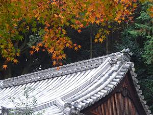 紅葉と屋根