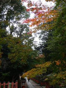 北東の入り口付近の紅葉