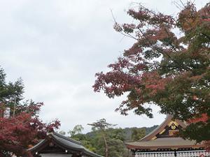 舞殿の屋根と紅葉