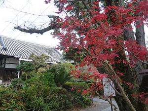 山門の後ろの紅葉