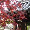 恵心院と宇治神社の紅葉・2016年
