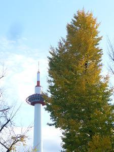 京都タワーとイチョウ