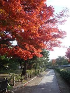 西側の参道の紅葉