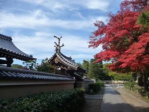 久昌院と紅葉