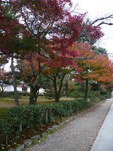 東側の参道の紅葉