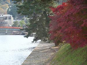 宇治川の紅葉