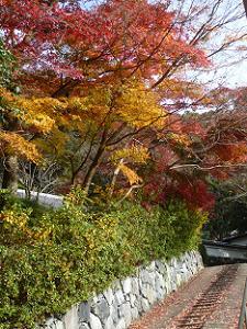 東禅院の参道の紅葉