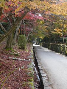 見下ろす琴坂と紅葉