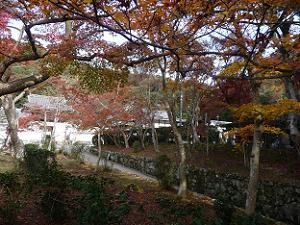 駐車場付近から見る紅葉