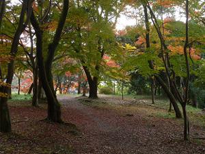 琴坂付近の紅葉