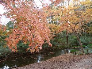 紅葉と泉川