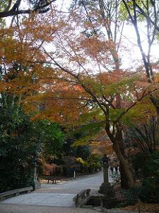 奈良の小川近くの紅葉