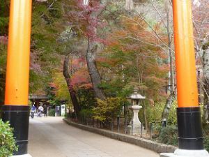 鳥居越しに見る参道の紅葉