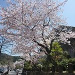 桜の季節の京都のホテル予約は2月中にしておくのがおすすめ