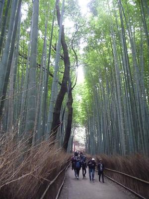 まっすぐに伸びる竹
