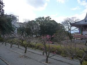 墓地の前の梅