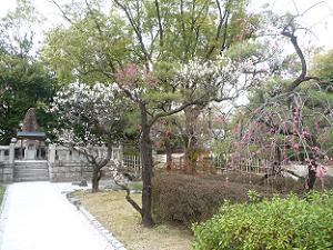 咲き進む梅の花
