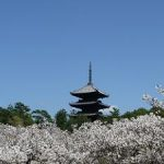 京都の桜は混雑する観光名所ほど美しい