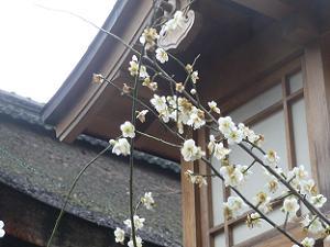 白梅と灯籠