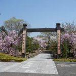 智積院で満開になった八重紅枝垂れ桜・2017年