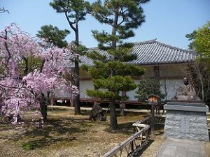 宝物殿と八重紅枝垂れ桜