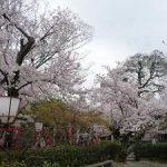 長建寺の満開の桜・2017年