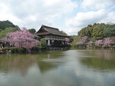 東神苑の八重紅枝垂れ桜