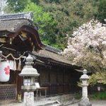 平野神社で見る遅咲きの桜・2017年