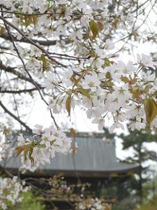 北野桜と楼門