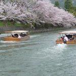 岡崎疎水の満開の桜・2017年