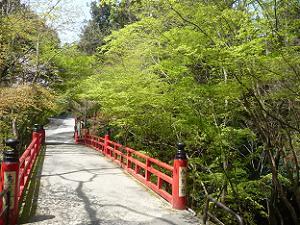 鳥居橋と新緑
