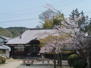 即成院の桜