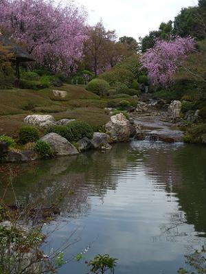 ひょうたん池と八重紅枝垂れ桜